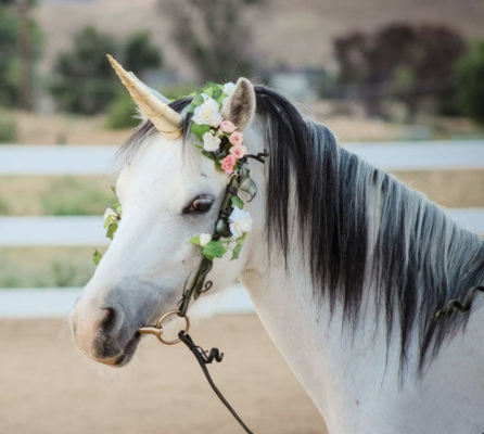 mythe derrière les licornes | Ma Jolie Licorne